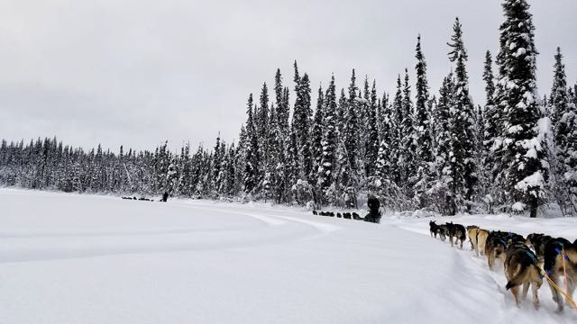 Friends Dog Sledding with Frisky Pups Sled Rides
