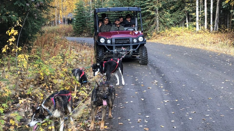 Fall Sled Dog Tours with Frisky Pups